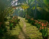 Stroll in the Coconut Plantation
